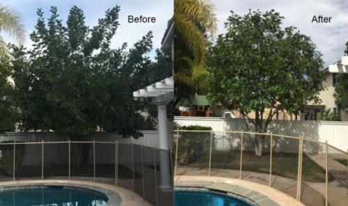 Tree Maintenance Temecula CA