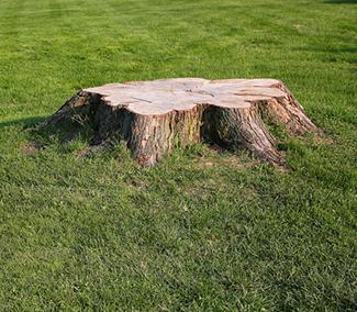 Tree Removal Murrieta CA