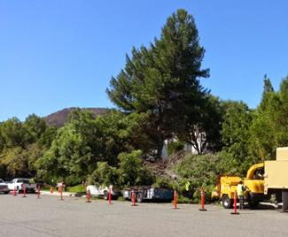 Tree Service Winchester CA